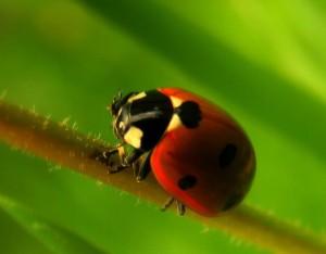 Prilákajte si do záhrady užitočný hmyz
