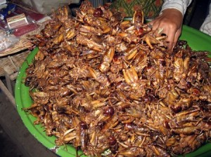 Vymente mäso za hmyz