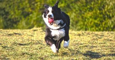 Jaké sporty vyzkoušet se psem? Přinášíme několik tipů! 2. díl