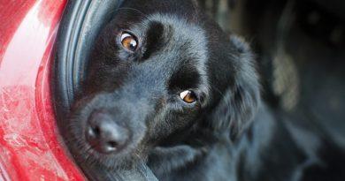 Naučte se cestovat se psem v autě aneb bezpečnost především 2. díl