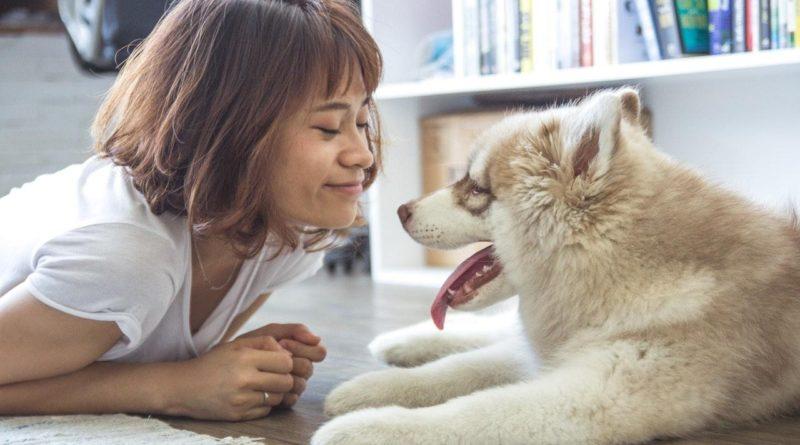 Znáte aktuální trendy vkrmivech pro psy a kočky?
