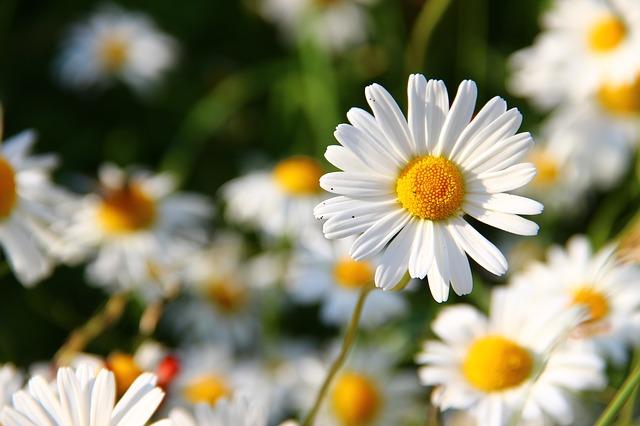 Jaké jsou nejznámější jarní bylinky?