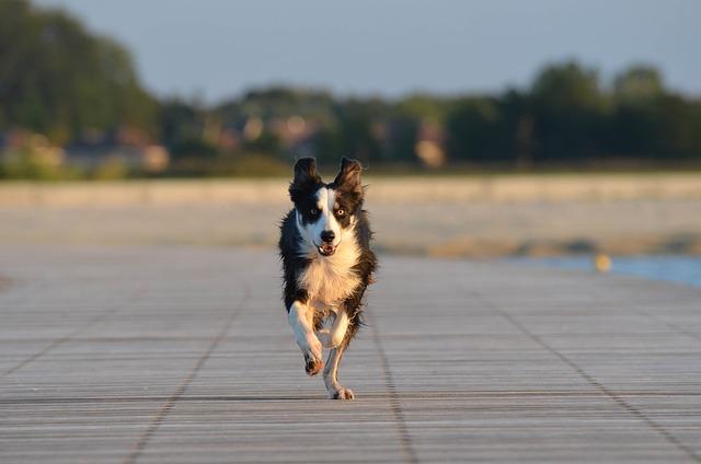 Jaké sporty vyzkoušet se psem? Přinášíme několik tipů! 3. díl