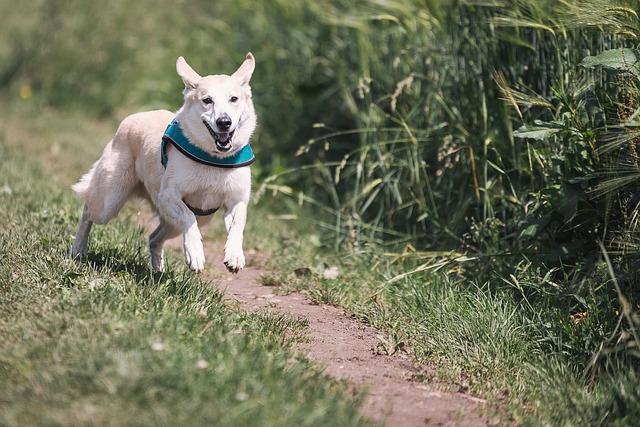 Jaké sporty vyzkoušet se psem? Přinášíme několik tipů! 1. díl
