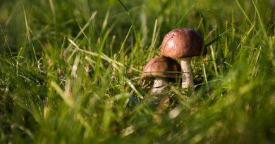 Chystáte se do lesa? Jak a které houby sbírat?