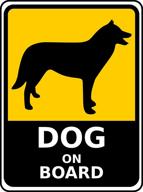 Naučte se cestovat se psem v autě aneb bezpečnost především 1. díl