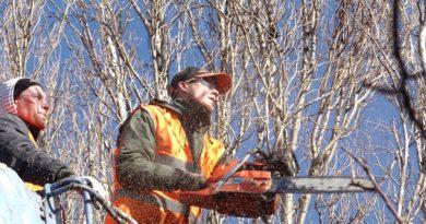 Jak na rizikové kácení stromů