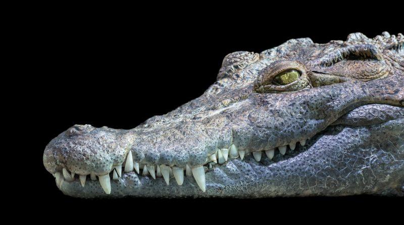 V Protivíně je možné navštívit unikátní ZOO, která se věnuje chovu krokodýlů