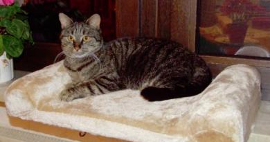 Odpočívadlo pro kočky představuje skvělou investici